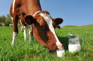Государство поддержит молочное скотоводство