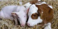Ветеринария и зоотехния